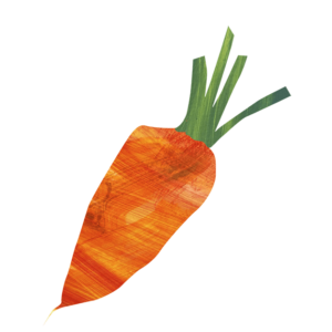 organic carrot drawing