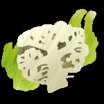 Potato & Cauliflower Pesto Salad