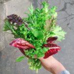 veg news 15th November